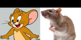 Xem Tom and Jerry In Real Life