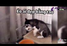 Xem Cười lăn lóc với những tình huống Lầy hài hước tik tok Việt Nam – Clip Hài P2