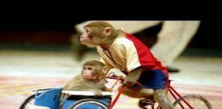 Nghe Con khỉ – Nhạc thiếu nhi remix sôi động cho bé