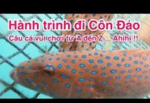 Hành trình du lịch Côn Đảo – Câu cá vui chơi từ A đến Z.