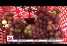 Ninh Thuận: du lịch dưới tán nho   VTV24