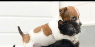 Xem Video Hài – Clip Hài Cười bể bụng – Clip Vui Chết cười vì Chó với Mèo