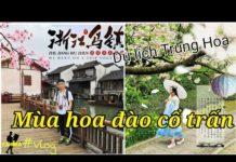 Choáng với cảnh đẹp Ô Trấn mùa anh đào ở Hàng Châu – Trung Quốc