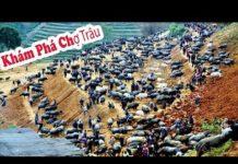Phượt Tây Bắc: Khám Phá Chợ Trâu Simacai – Du Lịch Việt Nam
