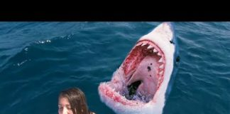 Xem she fell into the shark tank then this happened…