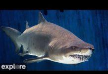 Xem Shark Lagoon Cam powered by EXPLORE.org