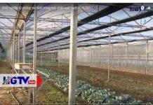 Xem Khởi nghiệp từ những mô hình trồng trọt, chăn nuôi sạch 21/6/2017