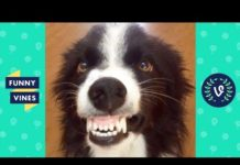 View TRY NOT TO LAUGH – Funny Animals That Will Brighten Your Day!