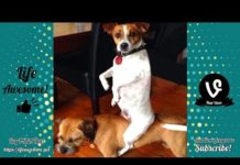 View Try Not To Laugh – Funny Animals Video Fails 2019 – Why Are Dogs So Weird