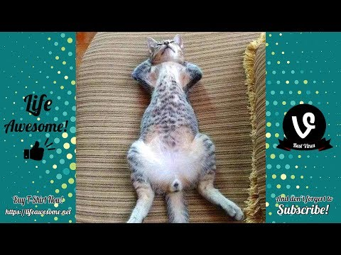 View TRY NOT TO LAUGH   These Cats Are CRAZY   Funny Animals Videos Fails 2019