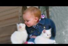 View Cute Babies Snuggling Cats – Funny Cat loves Baby Compilation