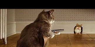 Xem Try Not To Laugh Tom and Jerry in Real Life | Cat is master of Hunting Mouse