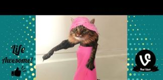 View TRY NOT TO LAUGH – Funny Cats Water Fails Video 2019 – Don't Bathe The Cats