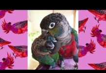 View Cute and funny parrots compilation #4 – 2019