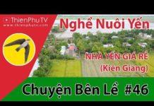 Xem ThienphuTV | NGHỀ NUÔI YẾN – CHUYỆN BÊN LỀ #46 – Khởi Nghiệp Với Nghề Nuôi Yến ở Kiên Giang