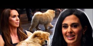 Xem Unprepared Businesswoman Relies On Cuteness of Puppies | Shark Tank AUS