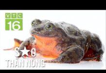 Bỏ túi 2 triệu/ngày nhờ nuôi ếch công nghệ 4.0   VTC16