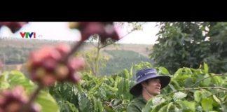 Công nghệ vào tận vườn cà phê | VTV24