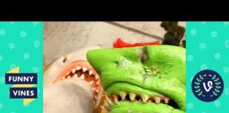 View TRY NOT TO LAUGH – Funny Shark Puppet Instagram Videos!