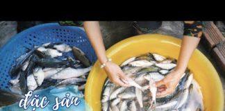 Đi bắt cá về nấu đám giỗ ở Miền Tây |Du lịch An Giang Việt Nam