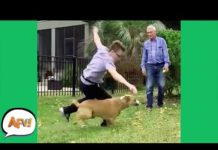 View Getting DOGGED DOWN! 😂   Funny Fails   AFV 2021